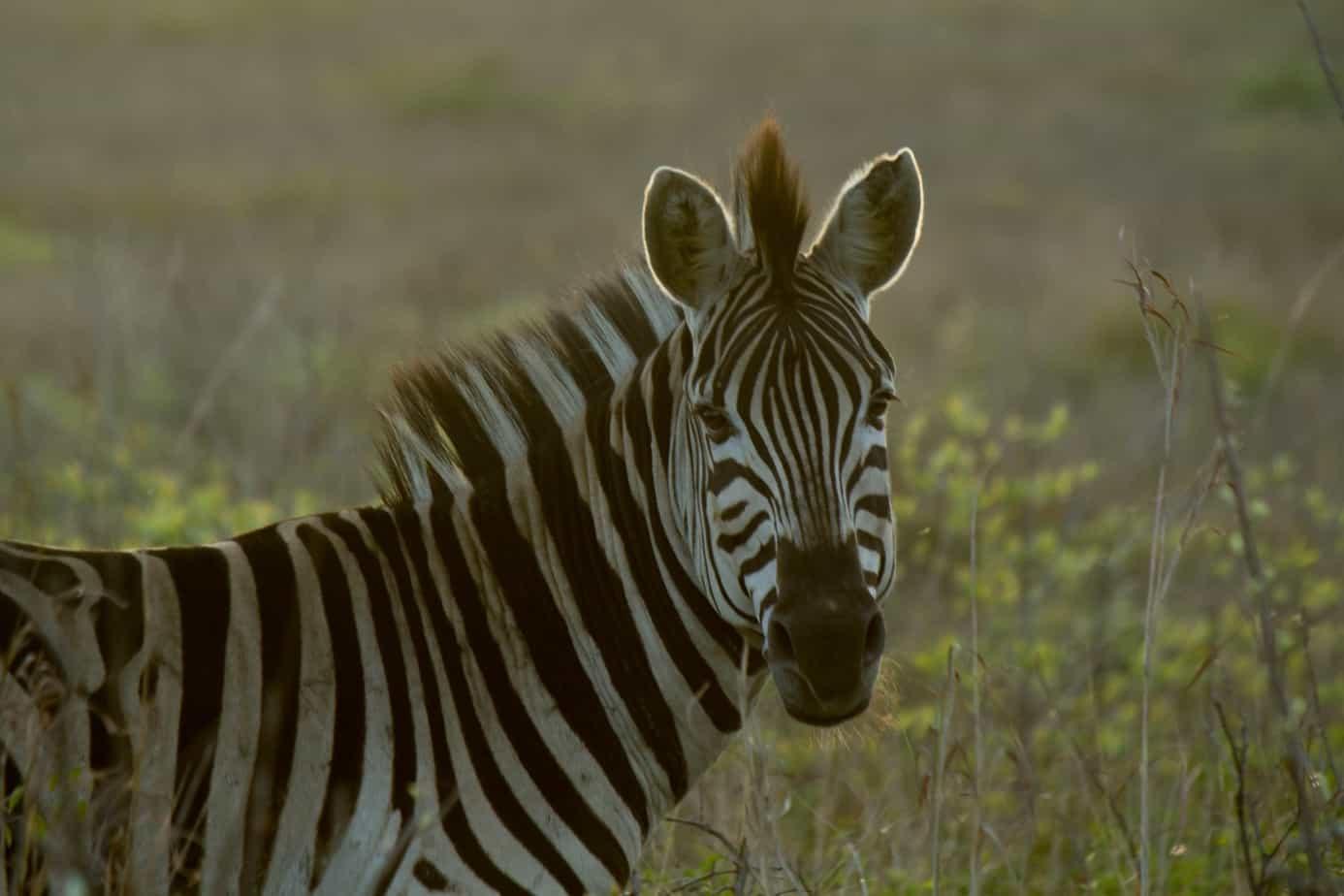 IMG 93161 - Tembe Elephant Park