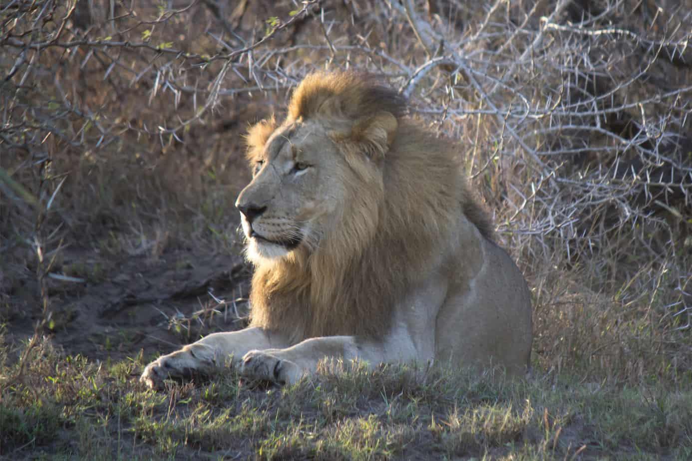 IMG 8156 2 - Tembe Elephant Park